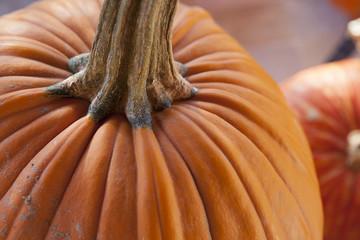 Pumpkin macro