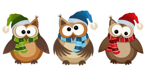 Funny owls