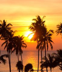 Coconut Horizon Palm Paradise