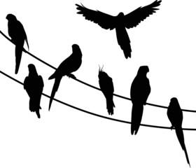 seven parrot black silhouettes
