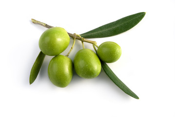 little branch of olives isolated