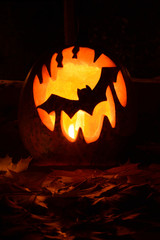 Bat pumpkin halloween