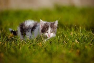 scared little kitten in the grass