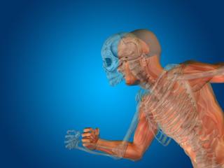 Conceptual Anatomy human body