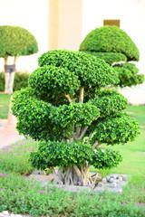 Beautiful tree in park