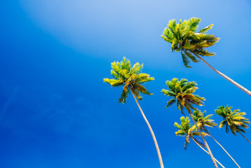 Palm trees on clear blue summer sky - wallpaper and background