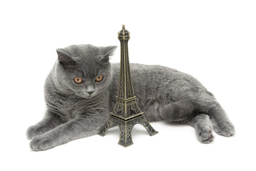 cat and Eiffel tower figurine isolated on white background