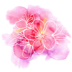 Cherry flowers on a watercolor background