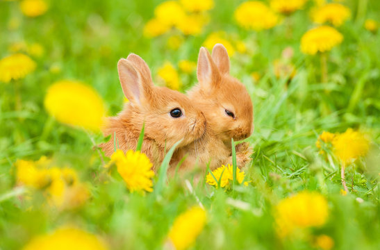 Two little sweet rabbits sitting in flowers outdoors