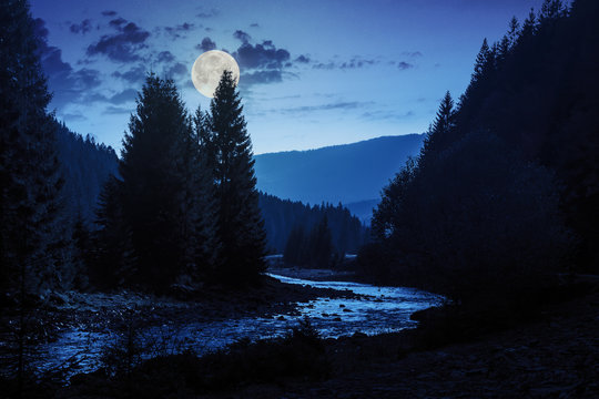 forest river with stones and moss at night