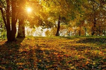 Autumn park background