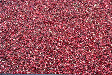 floating cranberries