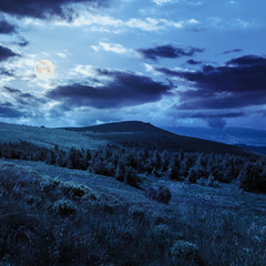 pine forest on a  hill at night