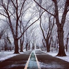 Winter Wonderland in Bucharest, Romania.
