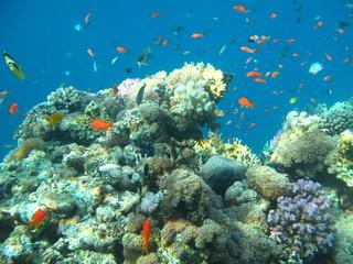 Richesses de la mer rouge