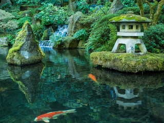 A Lantern and Koi in the Portland Japanese Garden