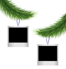 Two blank photoframes hanging on green pine branches isolated