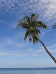 Blick aufs Meer und Palme