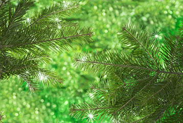 Natural conifer branches on green background