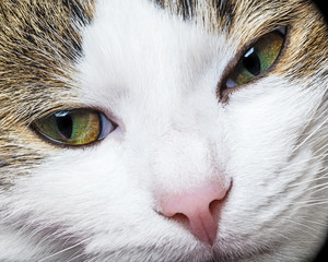 a green cat eyes close up