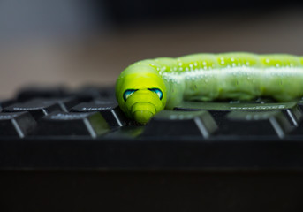 Malicious computer worm that secretly ruining your computer