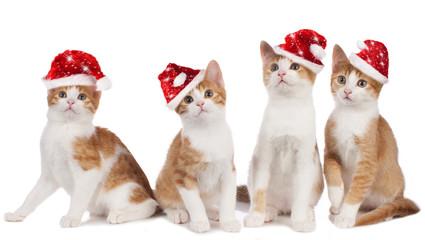 Vier Kätzchen mit Nikolausmützen isoliert