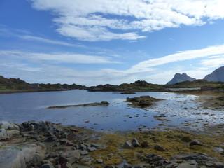 Algues goemon aux iles Lofoten Norvège