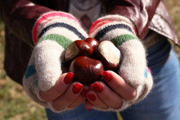 Hands in gloves holding chestnuts on natural background