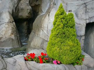 Small garden surrounded with roks