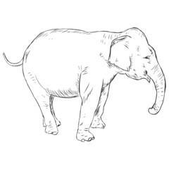 Vector Sketch Elephant