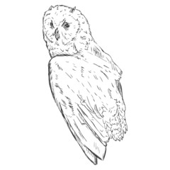 Vector Sketch Owl. Side View.