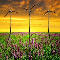 Spring meadow with wind turbines in the sunset