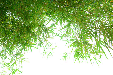 Green bamboo leaves on white background