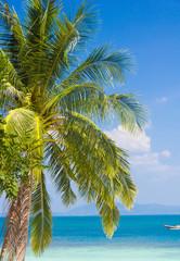 Jungle Lagoon Exotic Paradise
