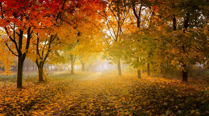 golden autumn in sunny forest, natural background