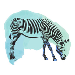 Colorful watercolor zebra cover.