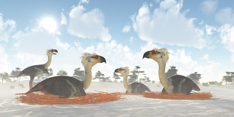 Phorusrhacos Bird Nests