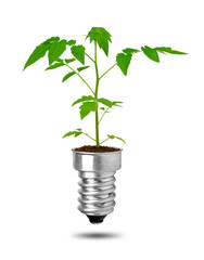 Plant growing from bulb. Concept of clean energy