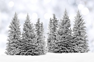 Group of frost covered trees in snow with silver background