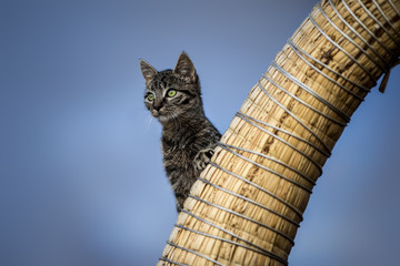 Curious cat climbing up for a view