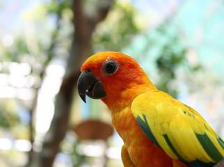 beautiful colorful parrot bird