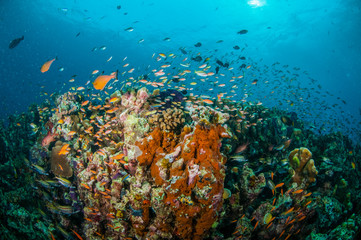 Various coral fishes, Gili Lombok Nusa Tenggara Barat underwater