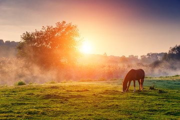 Wall Mural - horses grazing on pasture
