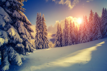 Wall Mural - Beautiful winter landscape