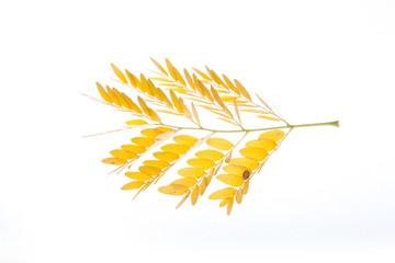autumn leaves cutout
