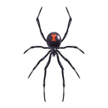 Realistic spider isolated