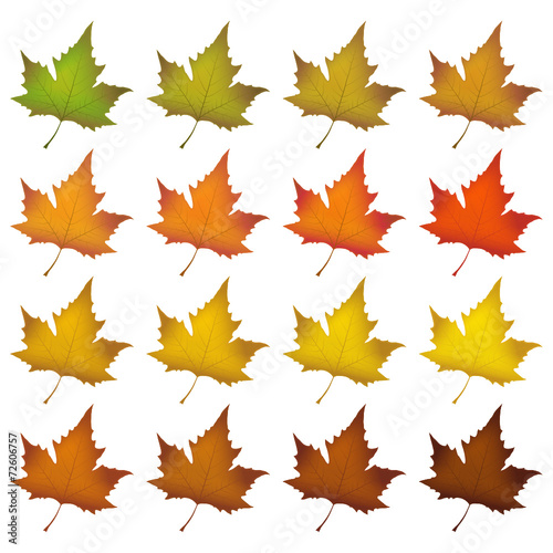 Blätter, Herbstblätter, Herbst, Symbol, herbstlich, Farben ...