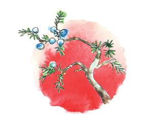 Branch of juniper tree and sun, vector