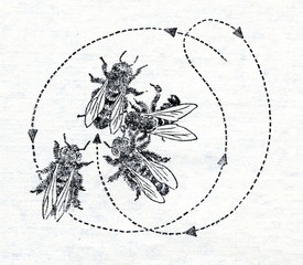The Round Dance of bee
