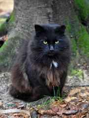 black cat outdoor next to the tree